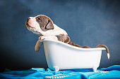 beautiful puppy washes in the bathroom