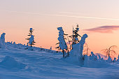 Snow covered trees. Northern Ural mountains, Russia