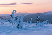 Snow covered trees on the Northern Ural, Komi Republic, Russia
