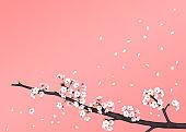 Cherry Blossom frame background, 3D illustration