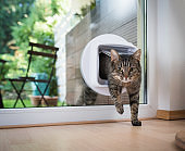 Cat passing through the cat flap