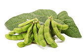 Fresh harvested soybean (edamame) on the white background