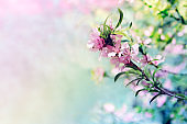 Spring blooming pink flowers on a tree branch.