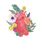 Realistic anatomical heart overgrown by blooming flowers and plants hand drawn on white background.