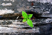 plant growing on old wood