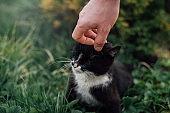 Мan caressing a kitten