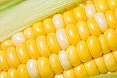 Corn on the cob, closeup
