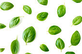 Basil leaves isolated on white background. Top view. Flat lay. Close up'n