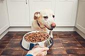 Feeding of hungry dog