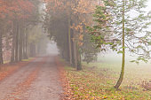 Beautiful scenery in the forest with fog and mist and autumn foliage