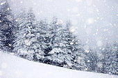 snow covered fir trees in heavy snowfall - Christmas background