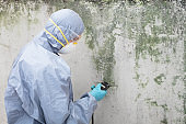 Pest Control Worker Examining Pest On Wall