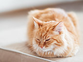Cute ginger cat lying on couch. Fluffy pet looks sleepy. Cozy home background.