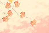 autumn landscape with bright colorful leaves