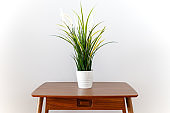 Indoor Plant On Table - Home Decor