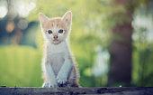 Lovely Kitten sitting staring at something.