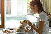 Mixed Race teenage girl teaching pomeranian dog to do a trick on the bed.