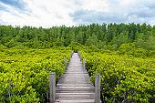 Mangroves inTung Prong Thong or Golden Mangrove Field at Estuary Pra Sae, Rayong, Thailand