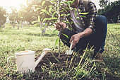 Young man planting the tree while Watering a tree working in the garden as save world concept, nature, environment and ecology