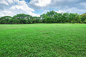 Beautiful landscape in park with green grass field.