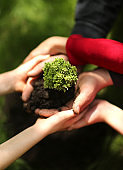 Growing concept eco Group hand children planting together on soil backgroud