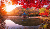 Autumn Maple  in Naejangsan national park, South korea