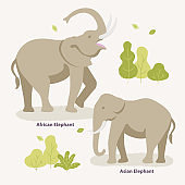 African Elephant and Asian Elephant walking in the zoo, park vector flat illustration. Kinds of elephants infographic elements isolated on light background, bushes and trees around them.