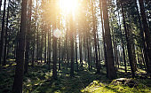 Sunshine forest trees - Peaceful outdoor scene