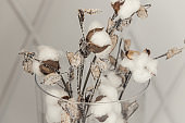 Cotton flowers as a symbol of tenderness and new life