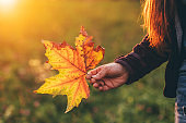 Hand holding a yellow autumn leaf, on sunny background