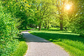 Sunny Nature Path in spring