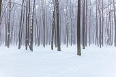 bare forest trees in winter during foggy weather