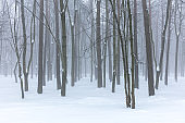 landscape of winter forest covered by mist