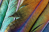 Extreme macro of several beautiful bird feather texture and reflection multi colors light