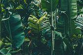 Rainforest leaves background