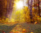 Beautiful autumn landscape with yellow trees, and sun. Colorful foliage in the park. Falling leaves natural background