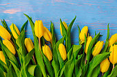 tulips overhead on blue wooden background. copy space