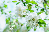 hello may text with white apple flowers