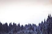 Winter wonderland background. Snowy fir trees winter card