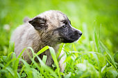 Adorable rescued puppy playing in the grass