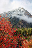 Early Autumn in the Wasatch