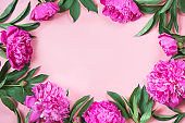 Boorder of pink peony flowers as frame on punchy pastel pink. Copy space for text. Top view. Flat lay.