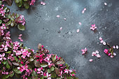 Pink flowers of blossoming fruit tree on vintage table. Copy space. View from above.