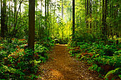 Pacific Northwest forest hiking trail
