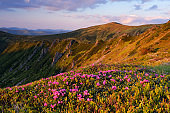 Blooming valley