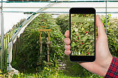 Internet of things in agriculture and smart farming