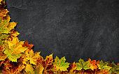 Autumn leaves on dark slate background