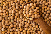 Close up a soybeans grain seed background