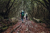 Two backpackers walk in fairy tale forest