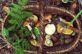 basket with mushrooms and fern leaf  in forest